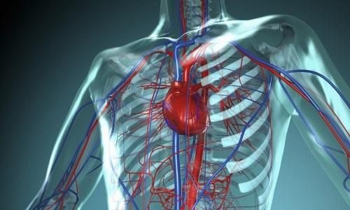 При грыже позвоночника нарушается кровоснабжение внтуренних органов