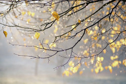 Холодная и сырая погода как факторы провоцирующие возникновение бронхита