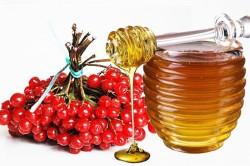 Отвар из калины с медом при лечении обструктивного аллергического бронхита