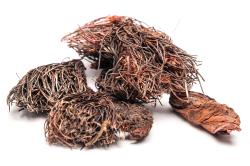 Трава красной щетки при лечении поликистоза