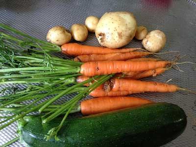 морковь, картофель и кабачок