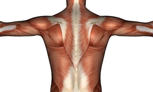 Cпазм мышц спины может быть показанием к проведению вытягивания