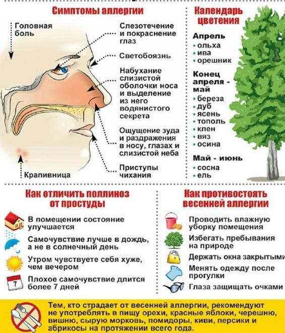 Симптомы аллергии и отличия ее от простуды