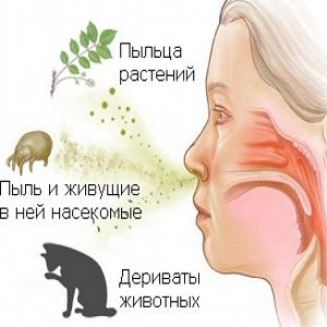 Провокаторы аллергического ринита