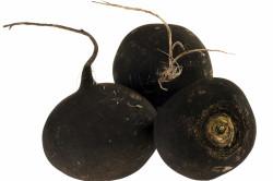 Лечение бронхита соком черной редьки